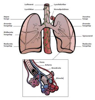 hvordan diagnosticeres lungekræft